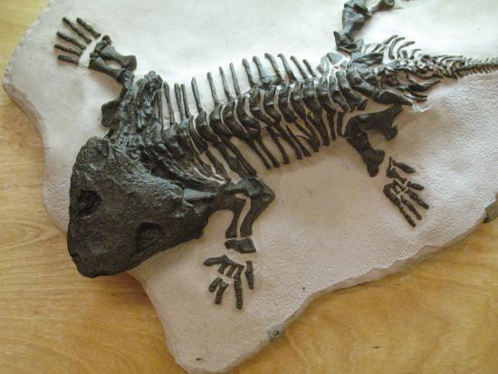 Crater Rock Museum: fossils