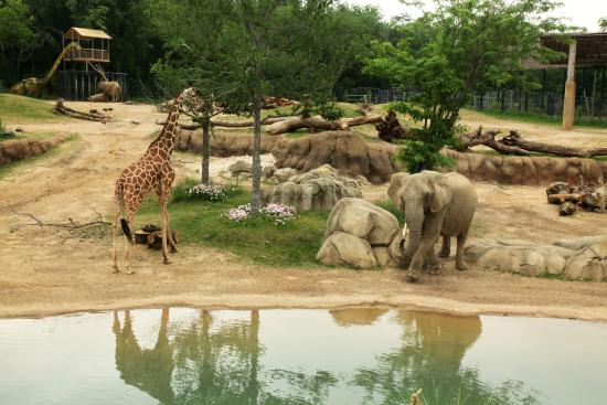 The 10 Closest Hotels To Dallas Zoo Tripadvisor Find Near