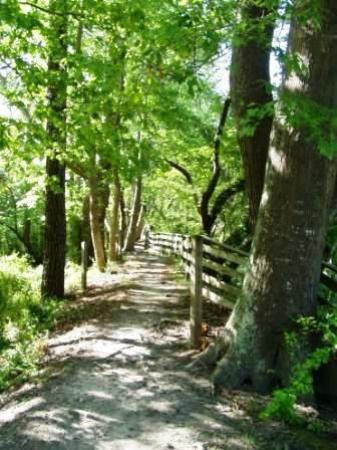 South Mills, Carolina del Norte: Trails