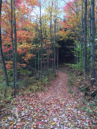 Amee Farm: Hiking trail across the street