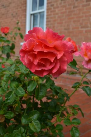 Heritage Inn Bed and Breakfast: Autumn Flowers