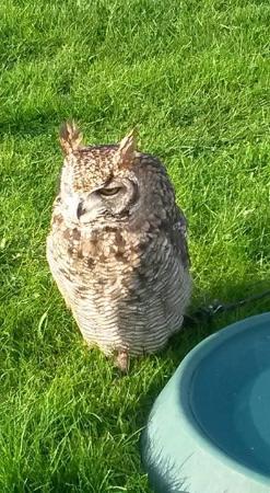 Woodlands Falconry and Bird of Prey Centre. : Owl