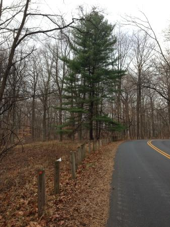 Alapocas Run State Park: Road alongside the park that goes to parking lot