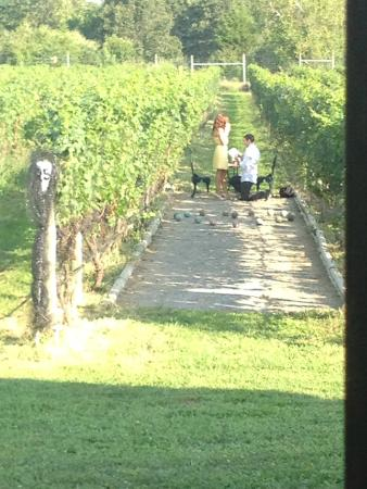 Cutchogue, État de New York : Romantic Vineyard Walks at Sannino Vineyard