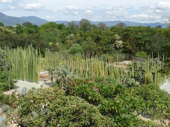 Foto de jard n etnobot nico oaxaca cactaceas tripadvisor for Jardin oaxaca