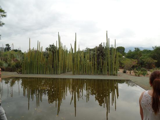Foto de jard n etnobot nico oaxaca cactaceas tripadvisor for Jardin etnobotanico oaxaca