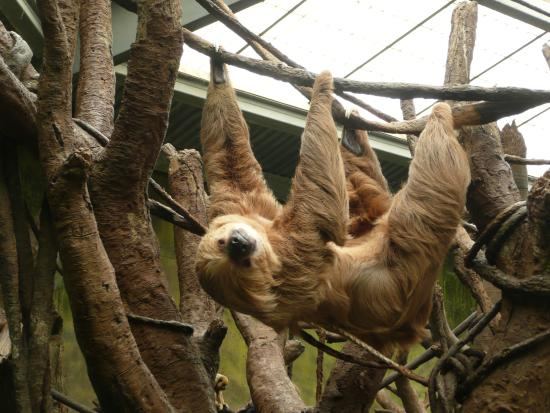 Image result for omaha zoo sloth