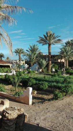 Les jardins de Tazzarine: IMG-20151024-WA0011_large.jpg