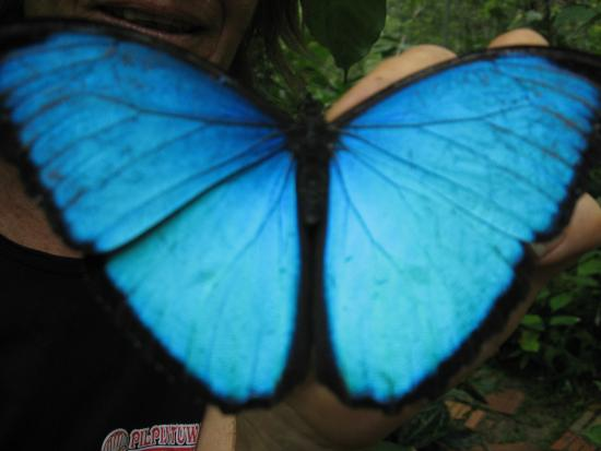 Amazon Rainforest Lodge: Mariposario
