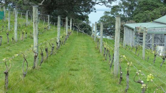 Pulau Waiheke, Selandia Baru: Kennedy Point Vineyards - Great small vineyard!