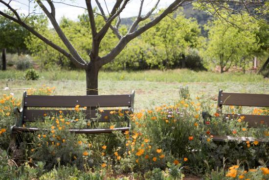 Healing Garden and Meditation Lake - Picture of Sedona Mago Retreat ...