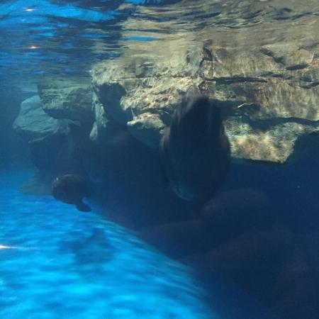Underwater World Langkawi - Picture of Underwater World Langkawi ...