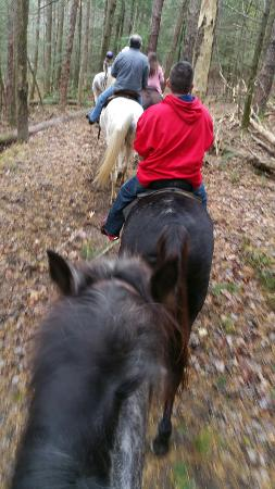 Cades Cove Riding Stables: 20151101_141119_large.jpg