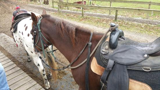 Cades Cove Riding Stables: 20151101_132902_large.jpg