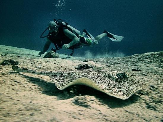 Beachouse Dive Hostel Cozumel: Dive with us.