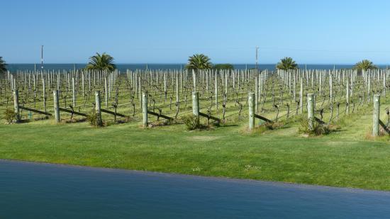 Watea Lodge: Elephant Hill Vineyard on the ocean