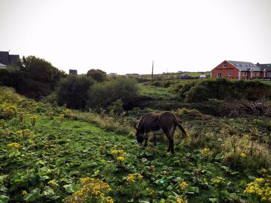 Aille River Hostel: Along the road of the hostel