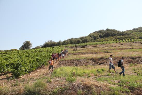 Roquebrun, Γαλλία: Descente vers les caves