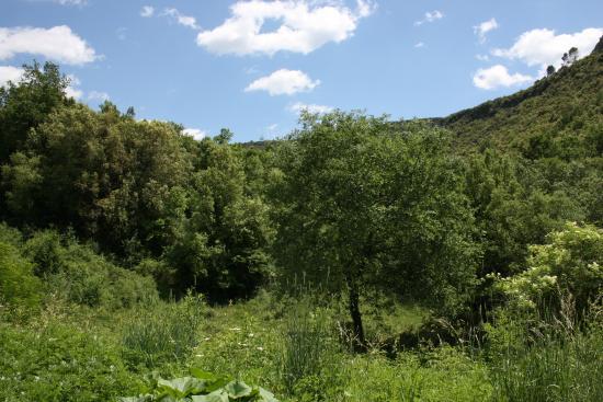 Sant Marti de Llemena, Hiszpania: Entrando en el bosque