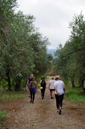 Roquebrun, Γαλλία: Entre vignes et oliviers