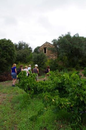 Roquebrun, Γαλλία: Ancien abri du vigneron