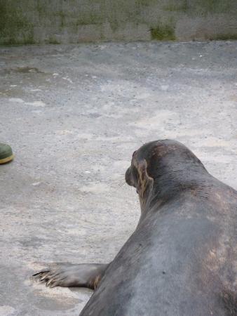 Cornish Seal Sanctuary : Seal - Foto di Cornish Seal Sanctuary, Gweek - TripAdvisor