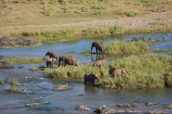 Olifants Rest Camp: In de rivier