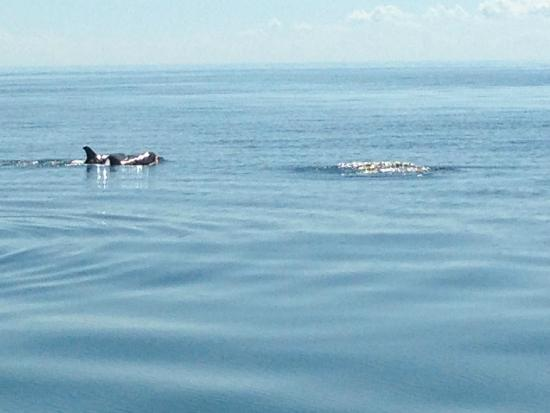 Tangier Island, Вирджиния: Dolphins!
