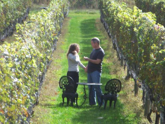 Peconic, Нью-Йорк: Romantic Vineyard walk @ Sannino Bella Vita