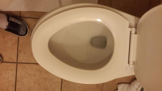 BEST WESTERN PLUS Eastgate Inn & Suites: loose toilet seat wiggled side to side, terrible