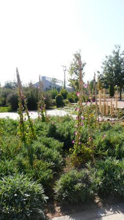 Jardin botanico de castilla la mancha albacete espanja for Jardin botanico castilla la mancha