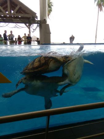 Homewood Suites by Hilton Corpus Christi: Texas State Aquarium