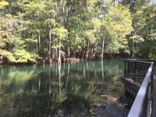Chiefland (FL) United States  city photo : ... Picture of Manatee Springs State Park, Chiefland TripAdvisor