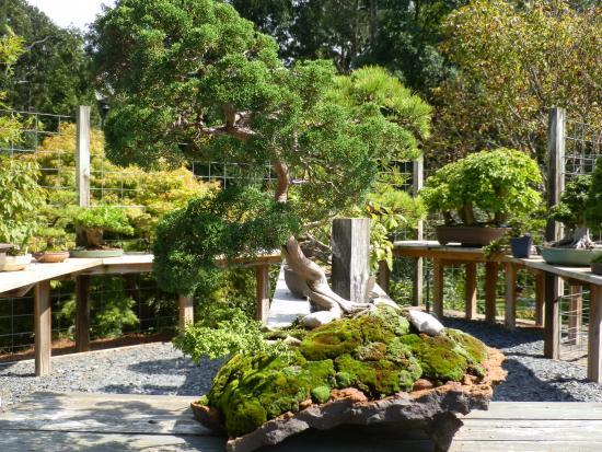 Smith Gilbert Gardens: Another bonsai