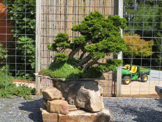 Smith Gilbert Gardens: More bonsai