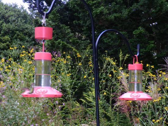 Smith Gilbert Gardens: Hummingbird feeders