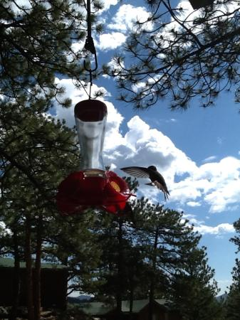 Machin's Cottages in the Pines: Broad-tailed hummingbird at the feeder