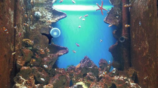 ... Malta National Aquarium - Picture of Malta National Aquarium, Qawra