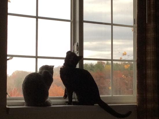 Extended Stay America - Wilkes-Barre - Hwy. 315: Our cats enjoying the view