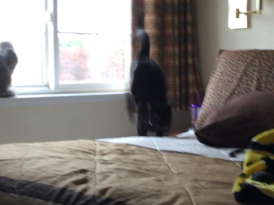 Extended Stay America - Wilkes-Barre - Hwy. 315: Cats playing in room