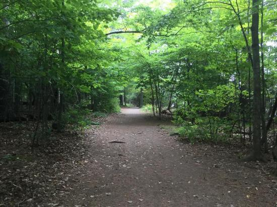 Lemoine Point Conservation Area : Treed path