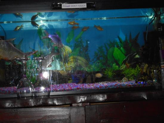 Nice fish tank - Picture of Chulmleigh Tandoori, Chulmleigh ...