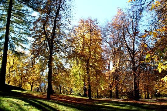 Cavalese, Italia: Il parco intorno