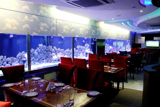 Options Dining Seating By Amazing Aquarium Picture Of