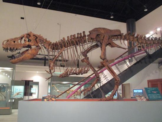 Kannamachi Dinosaurs Center