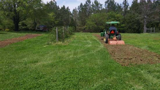Red Oak, Вирджиния: Putting in a new row of thornless blackberries....