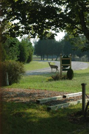 Red Oak, VA: The farm and surrounding acreage are home to countless wildlife