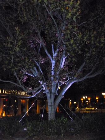 Del Frisco's Grille Irvine