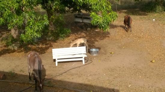 Estancia de Manzanares Guest Rooms: Wild Horses