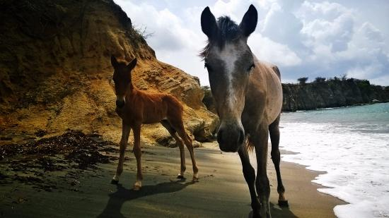 Estancia de Manzanares Guest Rooms : Black Beach, Wild Horses saying hello while laying on the beach!